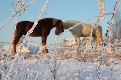ló, tél, szerelem
