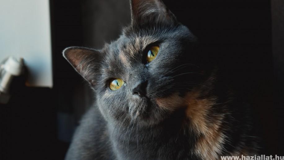 Ez az 5 macskára legveszélyesebb élősködő