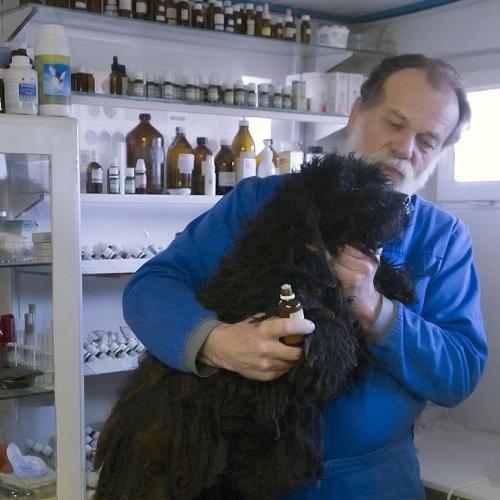 Dr. Mátray Árpád homeopata állatorvos