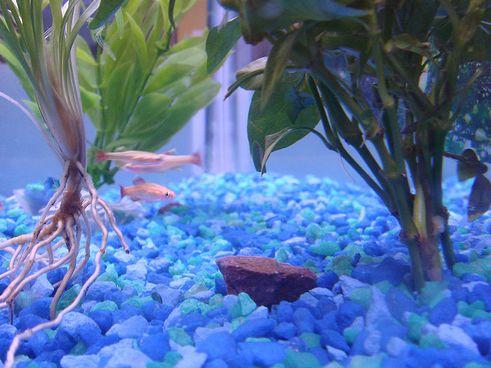 akvárium, aljzat, díszhalak