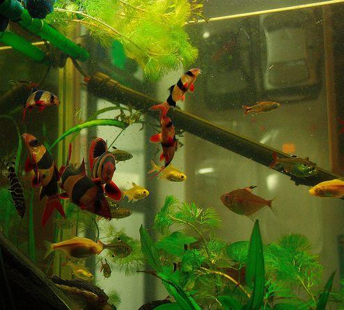 akvárium, zavaros, víz