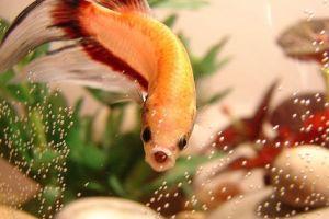Mitől zavaros az akvárium vize?
