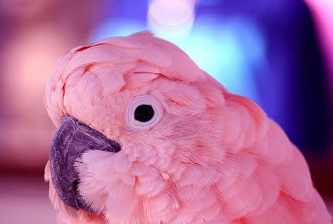 madár, toll, tolltépés