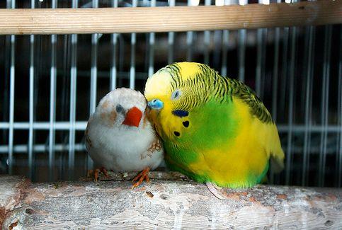 kalitka, madár, madártoll
