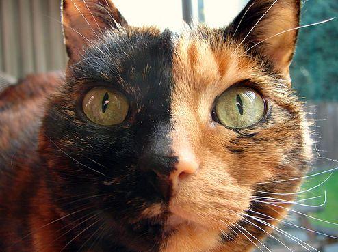 kis cica, cica, macska