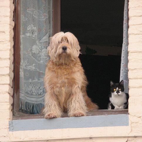 kutya, cica, ablak