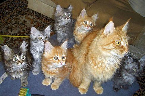 macska, önálló, kiscica