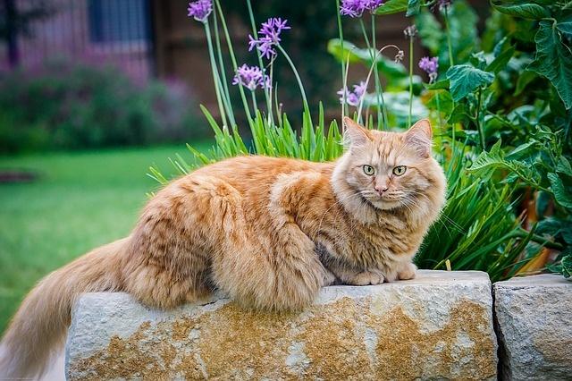 cat-1507223_640