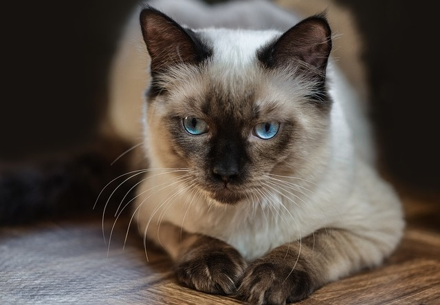cat-4155119_640