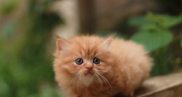 Hányféle macska él a Földön?