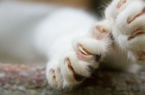 cica, macska, karom
