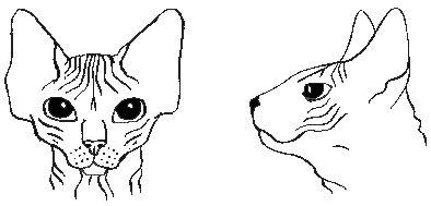 szfinx, macska, cica