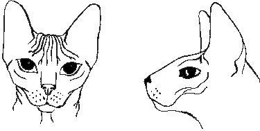 don, szfinx, cica