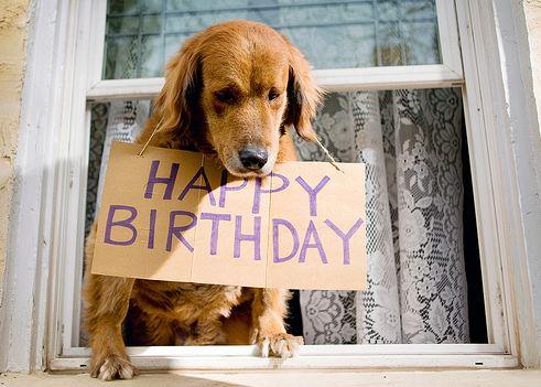 happy-birthday-dog
