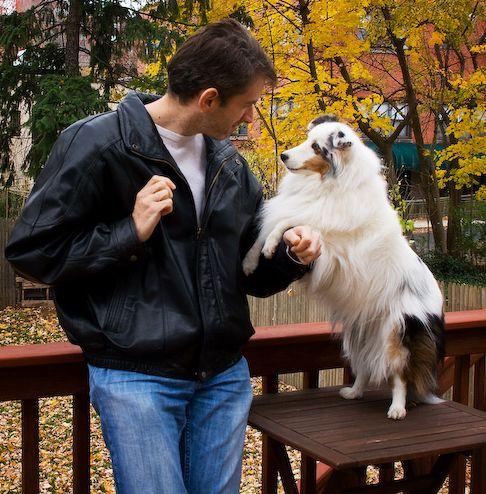 kutya, domináns, viselkedés