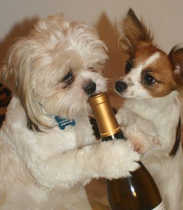 kutya, pezsgő