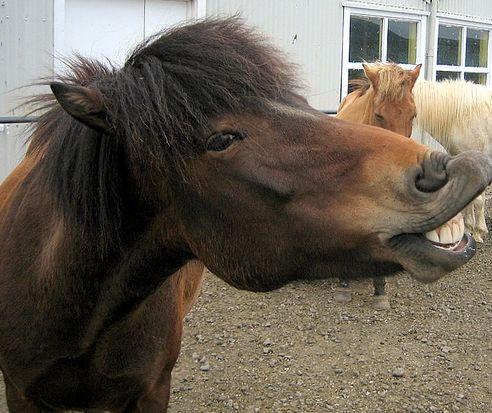 ló, lovas, lovaglás