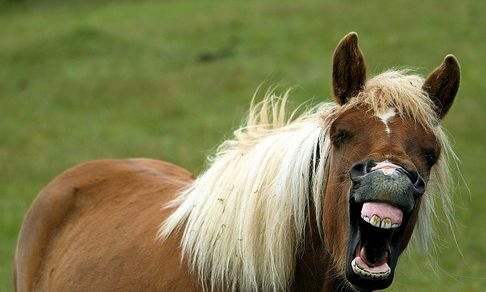 ló, nevet