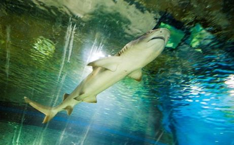 cápa, állatkert