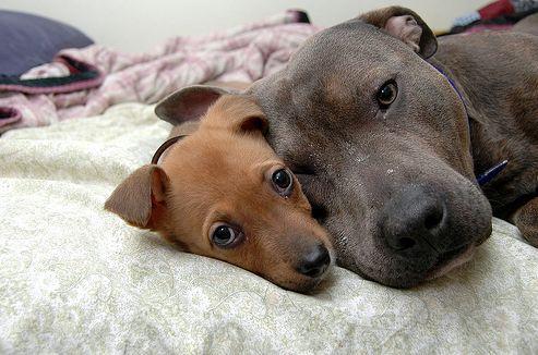 reuma, ízületi gyulladás, kutya
