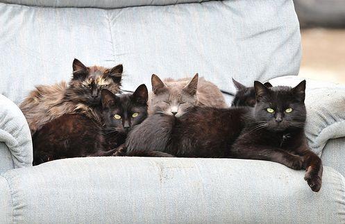 cica, macska, kanapé