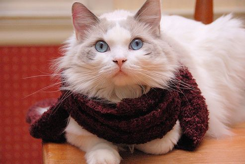 színes, sál, cica