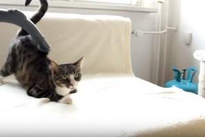Macskát porszívózni próbáltál már?