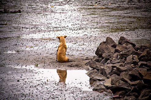 kutya, magányosan, egyedül