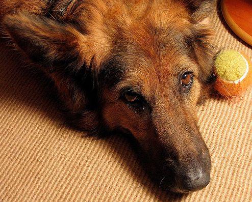 kutya, fél, egyedül