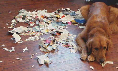 """Képtalálat a következőre: """"kutya pszichés problémák"""""""