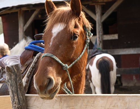 ló, lovak, vakcina