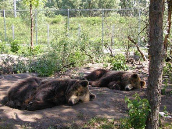medve, tzavasz, medveotthon