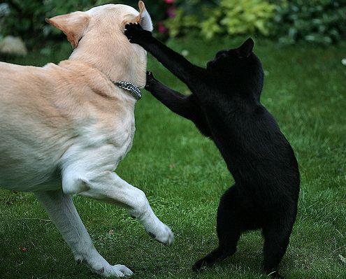 cica, kutya, verekszik