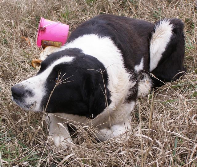 kutya, örökbefogadás, kutyamentők
