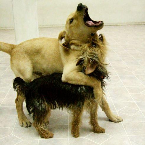 kutya, rangsor, erőviszonyok