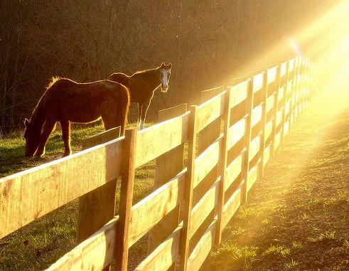 ló, lovak, fényérzékenység