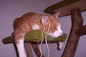 Mitől fárad el a cica?