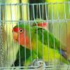 Kis madár, nagy igények: mekkora legyen a kalitka?