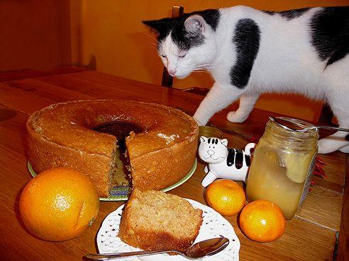 macska, süti, asztalon