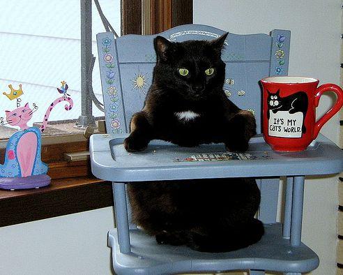 cica, macska, ül