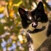 Lehet egy macska is jól nevelt?