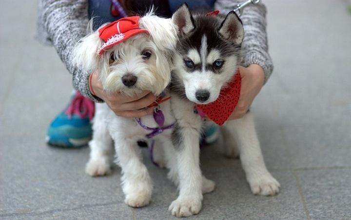gyerekbarat_kutyak
