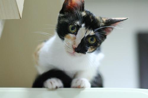 cica, macska, betegség
