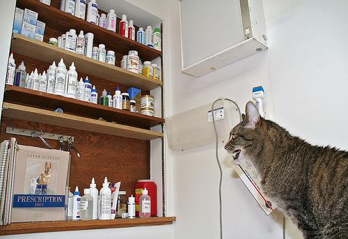 cica, macska, gyógyszer