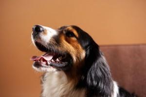 Izzadó kutyák, nyári veszélyek