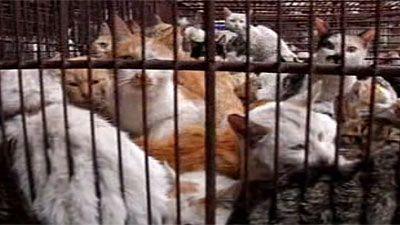 macska, ketrec, étterem