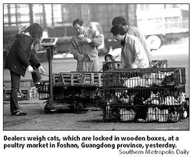 macska, hús, ketrec