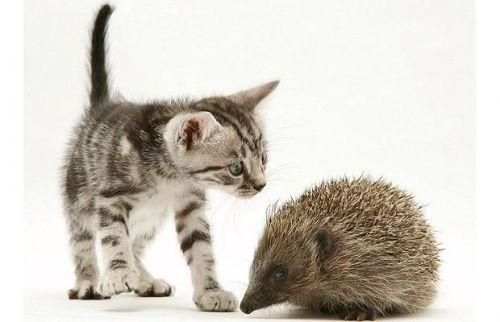 sün, cica, fénykép
