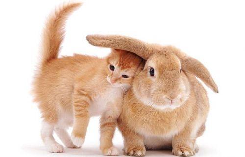 nyuszi, cica, képek