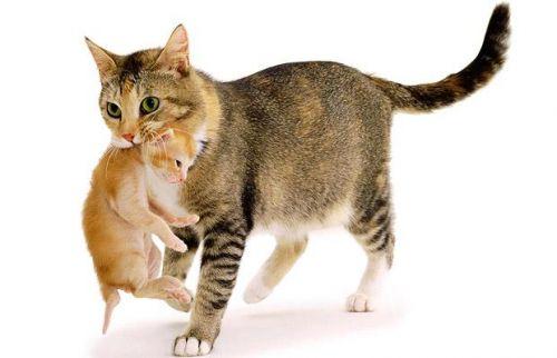 macska, cica, kép